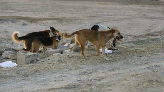 اثناء تواجده لتسلم الاستدعاء: كلاب تهاجم تلميذ الباكالوريا أمام المعهد بسليمان